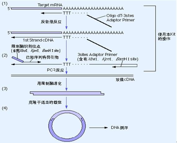 pcr产物纯化步骤